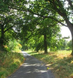 Trees Along Sutton Lane